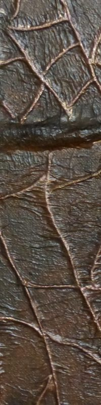 detail-brown-cracked-leaf-tiphanie-canada
